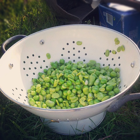 Broad beans and peas