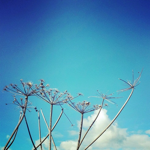 Seedheads and blue skies